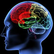 The study of the brain is important for linking human experience and behavior with basic physical processes.